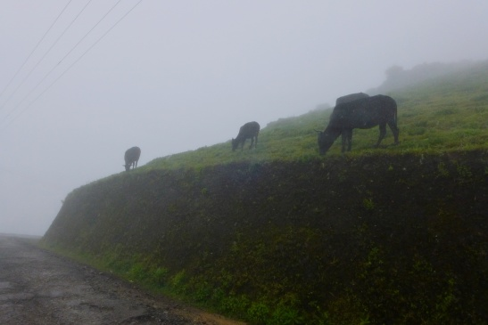 Weekend in Chikmagalur
