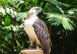Philippine Eagle Center, Calinan, Davao