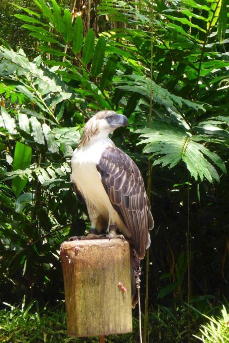 Philippine Eagle Center, Calinan, Davao